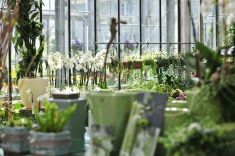 Blumen Keusch Innenbegrünungen